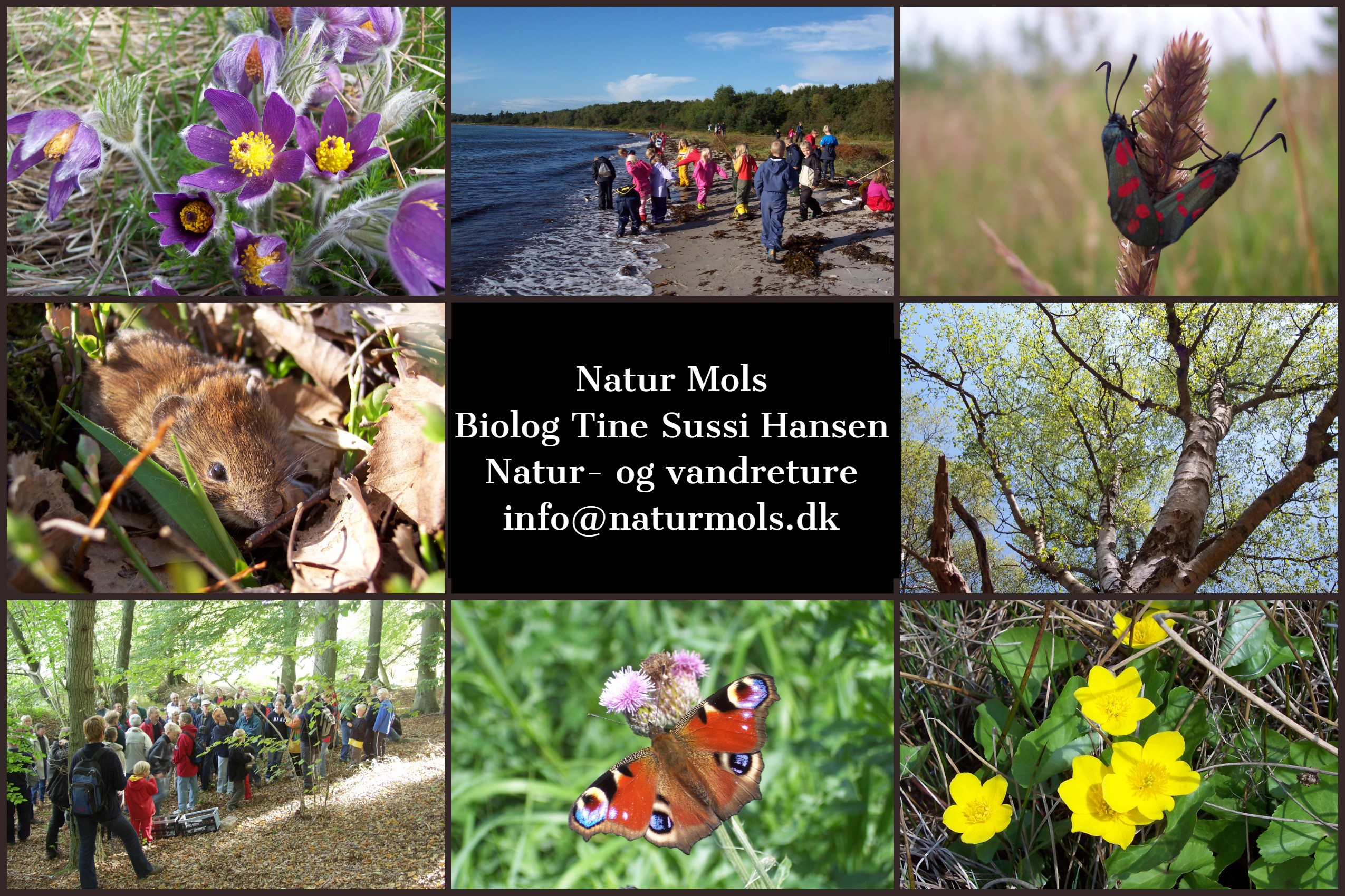 Natur Mols vandreture og naturoplevelser